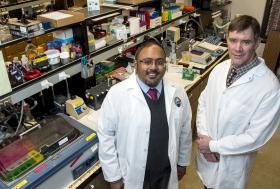 University of Montana Researchers Receive Grant to Study Traumatic Brain Injury
