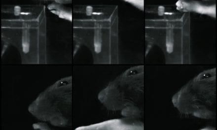Proper Rehabilitation Sequence Enables Paralyzed Rats to Regain Grip