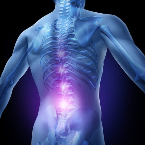 Neuroscience Study Shows Inhibiting of Muscle Contractions by Shining Light on Spinal Cord Neurons