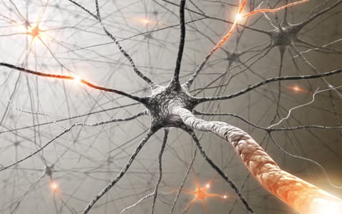 Neural Circuit Study on Animals May Show Promise for Brain Trauma Treatment