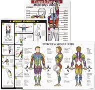 Wall Charts Display Muscles, Corresponding Resistance Exercises