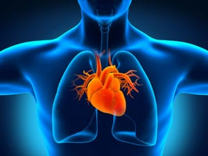 Heart's Pouchlike Structure In Some Patients May Shed Light on Strokes of Unknown Origin