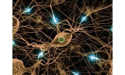 Targeting Microglia Brain Cells May Help Alleviate Chronic Neuropathic Pain