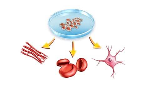 Researchers Suggest Idea to Coax Stem Cell-Derived Bone Tissue