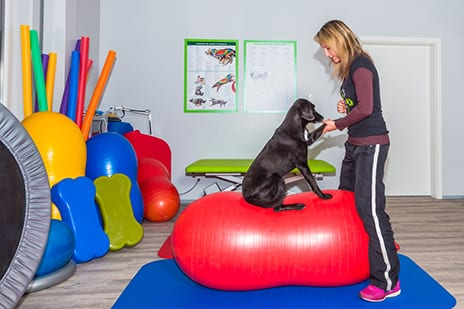 PT for Pooches? Bill Would Allow PTs to Treat Animals