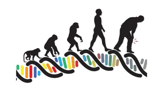 How is the Evolution of Walking Upright Linked to Osteoarthritis?