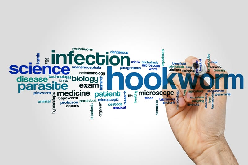 How Infecting Patients with Hookworm May Help Control MS