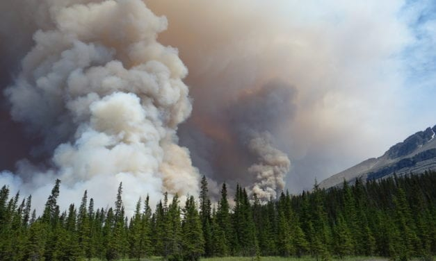 Should You Run During a Wildfire?