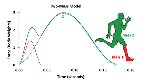 This figure illustrates the two-mass model of the human body and a corresponding pattern of running foot-ground force application developed by the researchers at Southern Methodist University. The overall force-time pattern can be accurately understood as the sum of two parts: 1) the force corresponding to the collision of the lower limb with the ground (dashed red curve); and 2) the force corresponding to the motion of the remainder of the body's mass (dashed green curve). The sum of the force curves provides the total ground force (solid blue curve). (Image courtesy of Laurence J. Ryan/SMU)